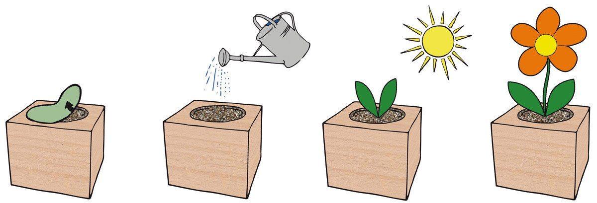 EcoCube-plante