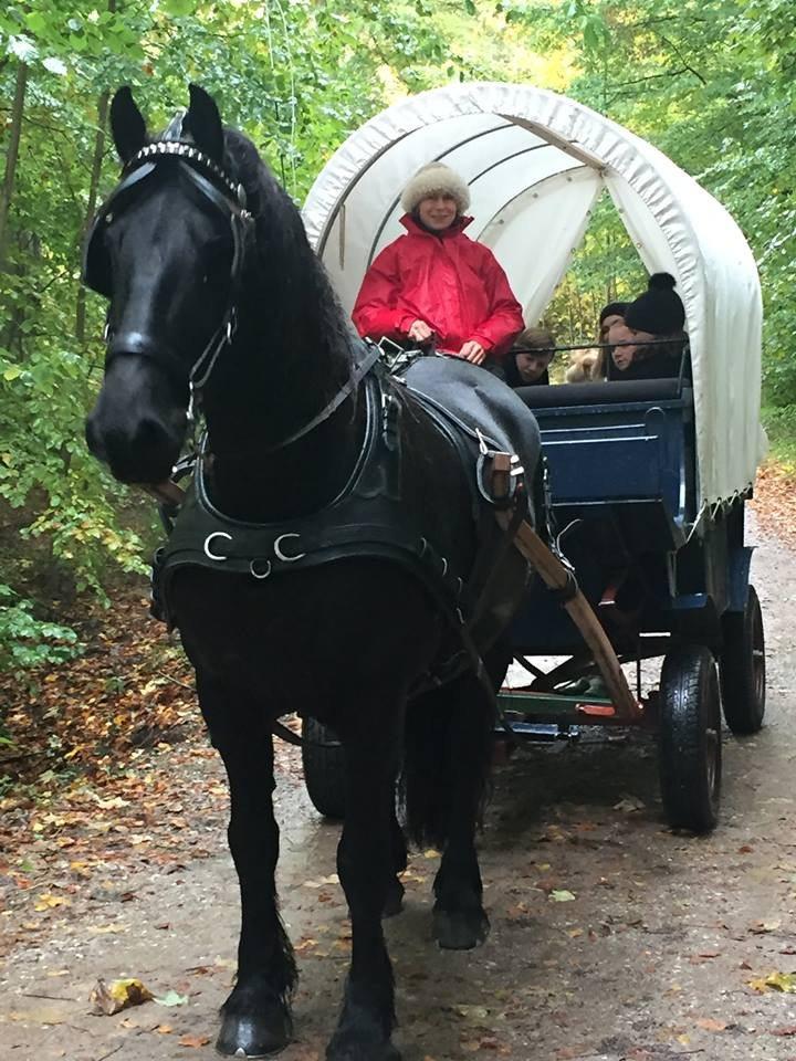 Hestevognskørsel med privat forestilling - Aarhus