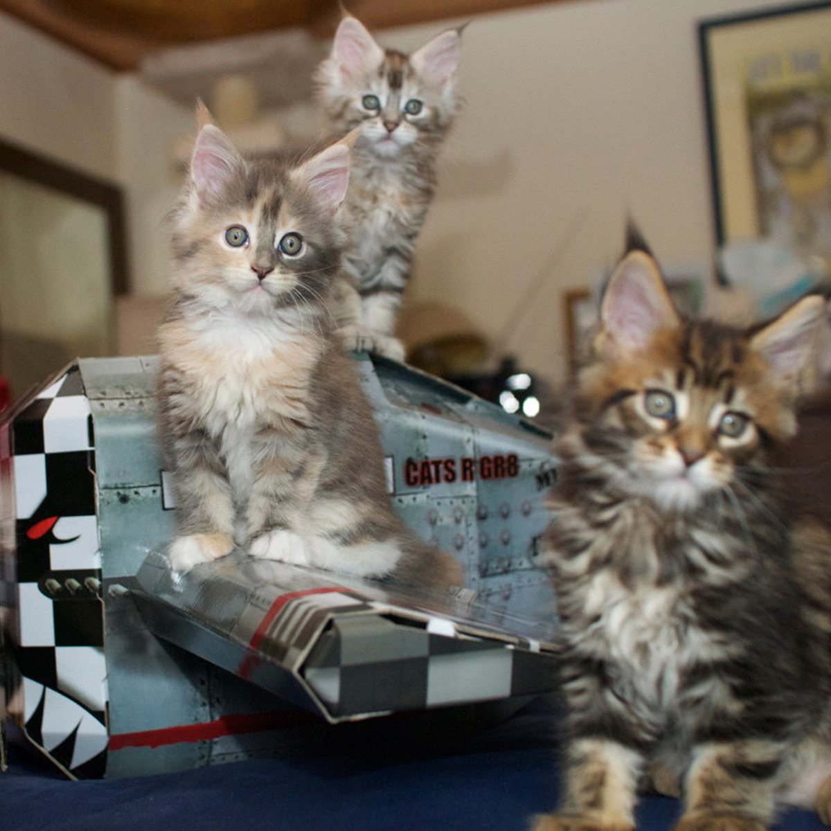 Legehus til katte