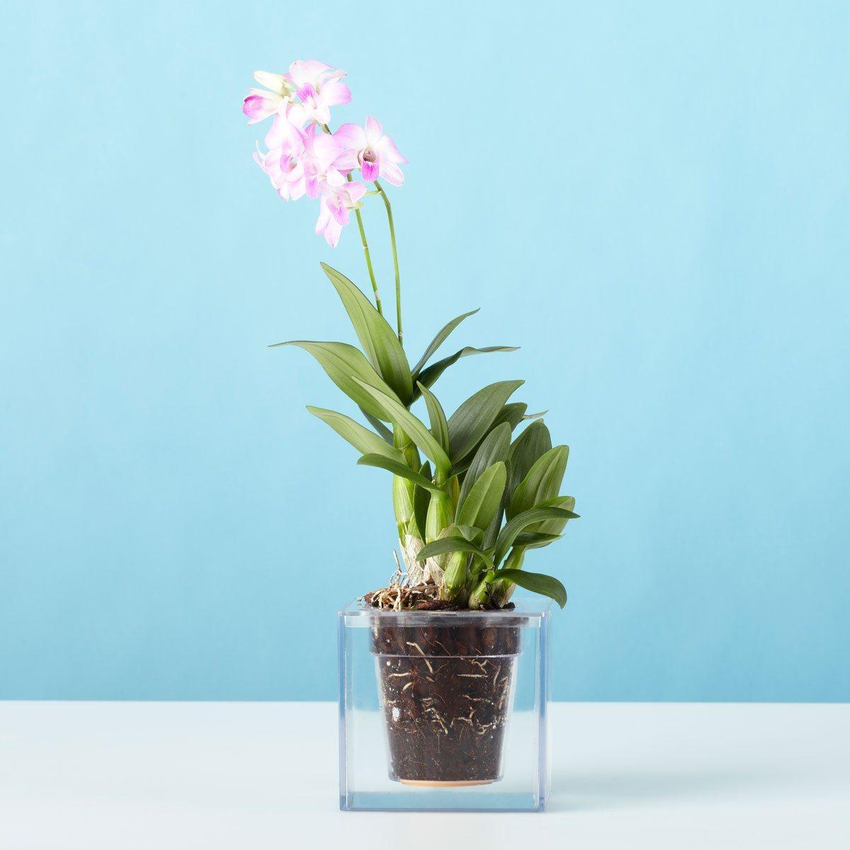 Den gennemsigtige blomsterkrukke