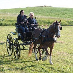 3 timers hestevognskørsel for 2 personer - Jyderup