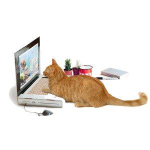 Cattop - kradsetræ til katte
