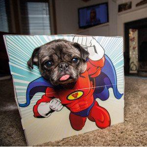 Fotokasse til kæledyr