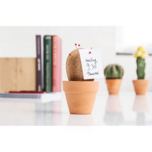 Kork-kaktus