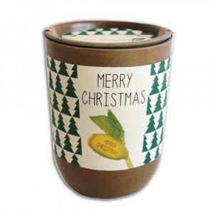 Spirende plante - Merry Christmas